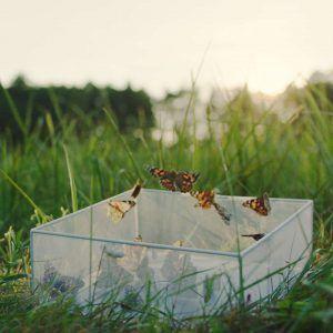 Schmetterlinge zum fliegen lassen